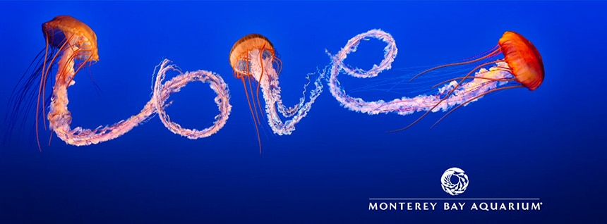 Juan Botero   Monterey Bay Aquarium